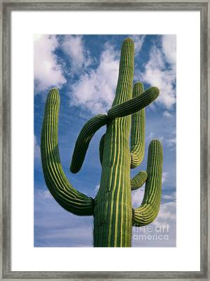 Cactus In The Clouds Framed Print by Inge Johnsson