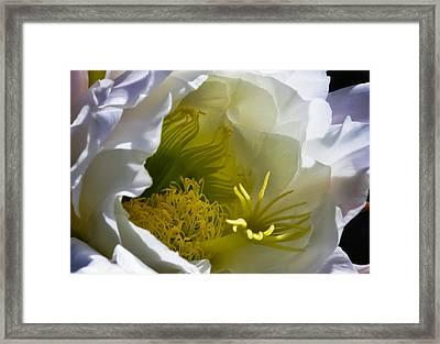 Cactus Interior Framed Print