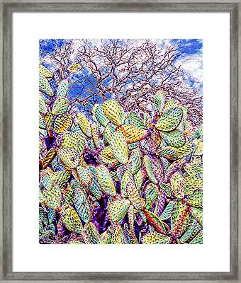 Cactus Of The Sonoma Mission Framed Print by Ken Evans