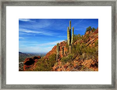 Cactus On Camelback Framed Print by Daniel Woodrum