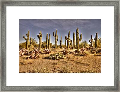 Cactus Patch Framed Print by George Lenz