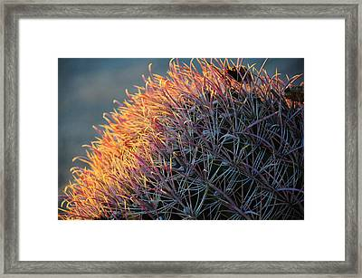 Cactus Rose Framed Print
