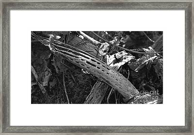 Framed Print featuring the photograph Cactus Skeleton by Kenny Glotfelty
