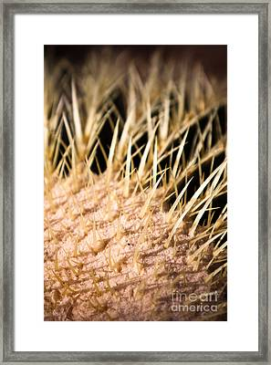 Cactus Skin Framed Print by John Wadleigh