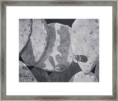 Cactus Tuna Framed Print by Diane Cutter