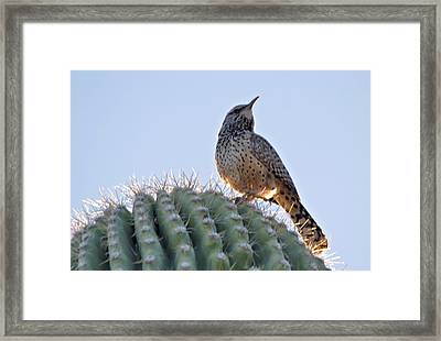 Framed Print featuring the photograph Cactus Wren by David Rizzo