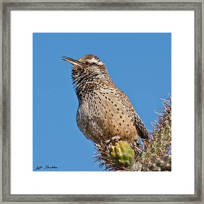 Cactus Wren Singing Framed Print