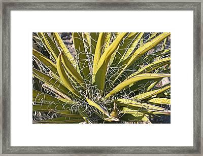 Cactus15 Framed Print