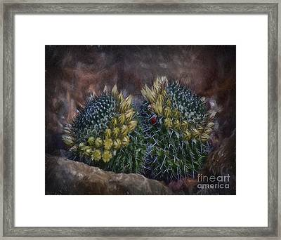 Cactuses  ... Framed Print by Chuck Caramella