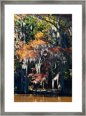 Caddo Lake 40 Framed Print by Ricardo J Ruiz de Porras