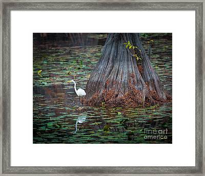 Caddo Lake Egret Framed Print by Inge Johnsson