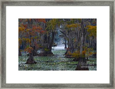 Caddo Lake Morning Framed Print
