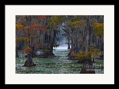 Caddo Lake Framed Prints