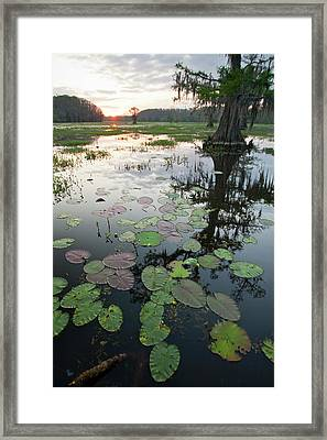 Caddo Lake, Texas's Largest Natural Framed Print by Larry Ditto