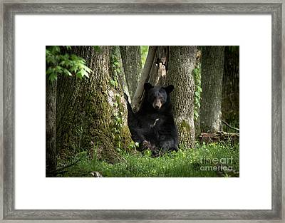 Cades Cove Bear Framed Print