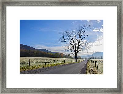 Tree On A Frosty Morn Framed Print by Marilyn Carlyle Greiner