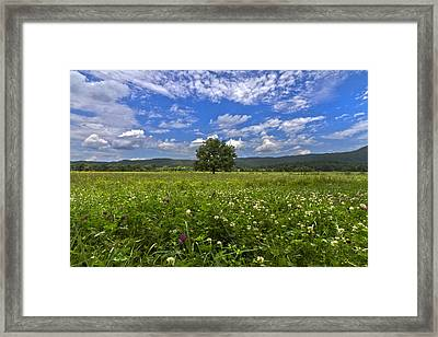Cades Cove In The Summer Framed Print
