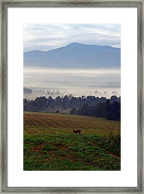 Cades Cove - Misty Morning Framed Print