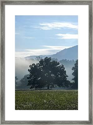 Cades Cove Tree  Framed Print