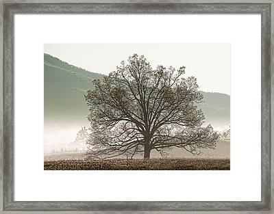 Framed Print featuring the photograph Cades Cove Tree by Phyllis Peterson