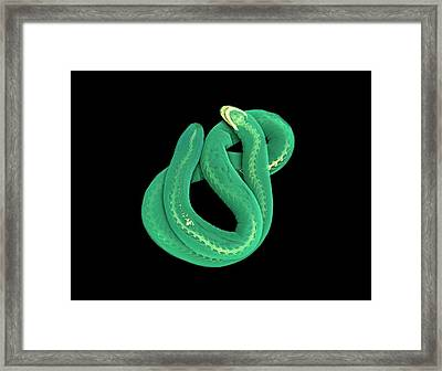 Caecilian Framed Print by Dan Sykes/natural History Museum, London