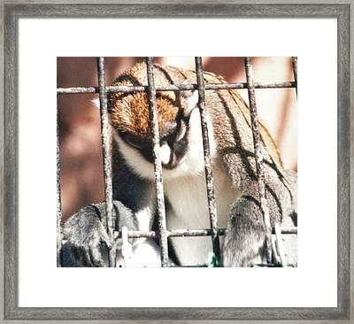 Caged But Strong Framed Print