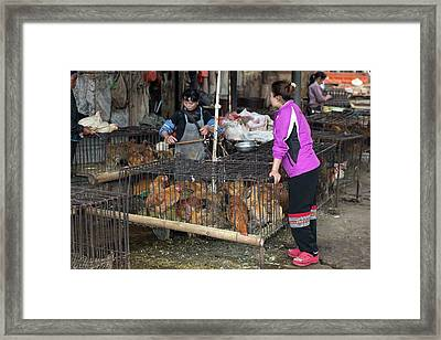 Caged Chickens In A Food Market Framed Print by Tony Camacho