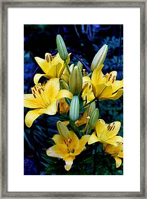Caged Lilies Framed Print
