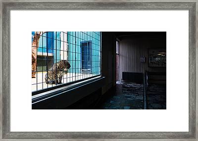 Caged Framed Print by Pedro Nunez