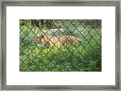 Framed Print featuring the photograph Caged by Fortunate Findings Shirley Dickerson