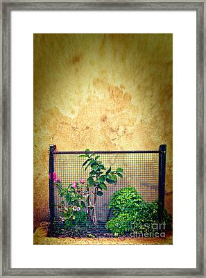 Caged Framed Print by Silvia Ganora