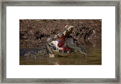 Caiman Vs Catfish 1 Framed Print