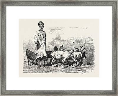 Cairene Milkman.  Egypt Framed Print by Litz Collection
