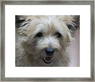 Cairn Terrier - Best Little Pal In The World... Framed Print