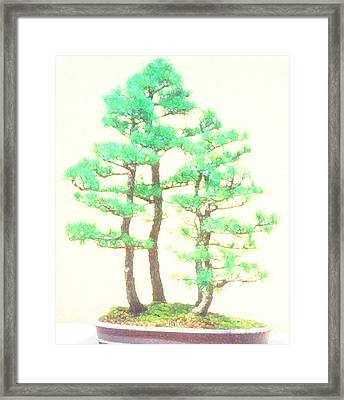 Caitlin Elm Bonsai Tree Framed Print