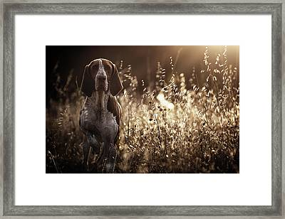 Caju Framed Print by Alexandre Marques