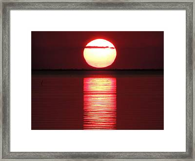 Framed Print featuring the photograph Cajun Heat by Charlotte Schafer