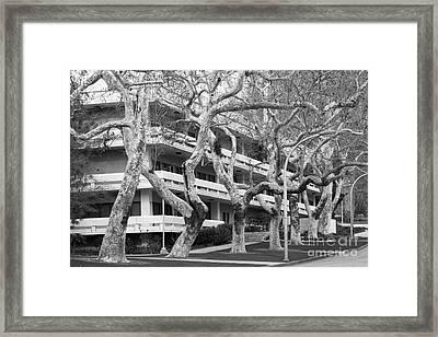 Cal Poly Pomona Landscape Framed Print by University Icons