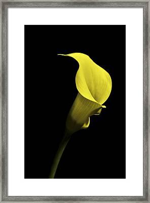 Cala Lilly Vi Framed Print
