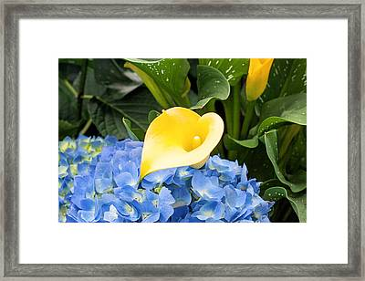Cala Lily Heart Framed Print by Michael Porchik