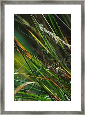 Calamagrostis Lines Framed Print by Rebecca Sherman