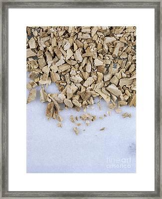 Calamus Framed Print by Geoff Kidd