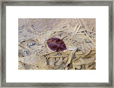 Calcareous Sinter And Leaves Framed Print by Dr Juerg Alean