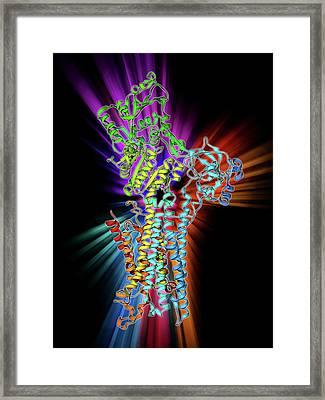 Calcium Atpase Ion Pump Framed Print