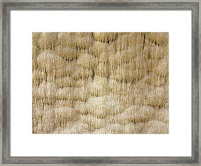 Calcium Carbonate Curtain Formation Framed Print