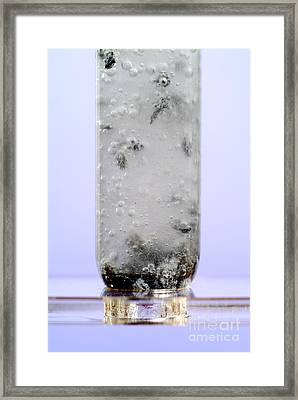 Calcium Reacting With Hydrochloric Acid Framed Print