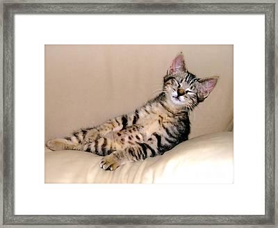 Calendar Kitten Rescue #1 Framed Print by Nancy Belle