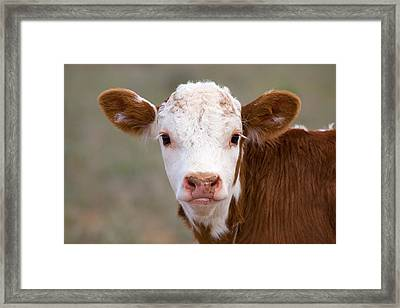 Calf Portrait Framed Print by Panoramic Images
