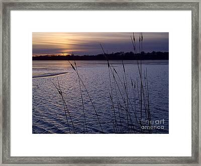 Calhoun Lavender Framed Print