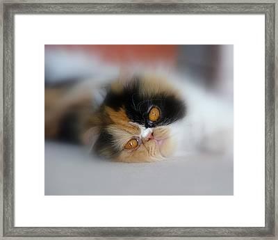 Cali Eyes Framed Print by Rhonda McDougall